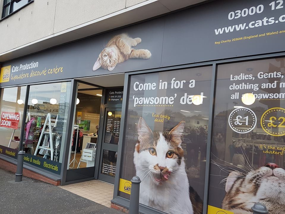 Cat charity looking for 'purrfect' location for new-style department store