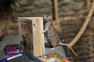 Happy ending as bookseller's novel move helps Bristol Zoo overcome shortage of rats' tales