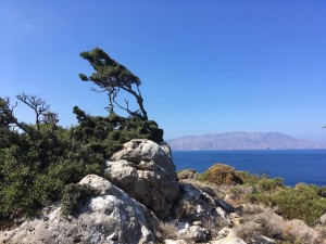 Bristol Business News Travel: Joining in with single-minded guests on a solo holiday in Crete